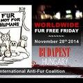 Worldwide Fur Free Friday - videók a nagy világból