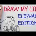 Karen az elefánt