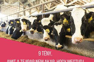 9 tény, amit a tejipar nem akar, hogy megtudj