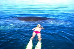 Egy hosszúszárnyú bálna megmenekülése - videó