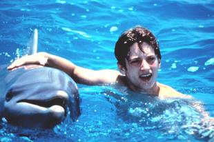 Miért hazudik a delfines Flipper tévésorozat? A delfináriumok másik arca, amit a sorozatban sosem láttál (18+)