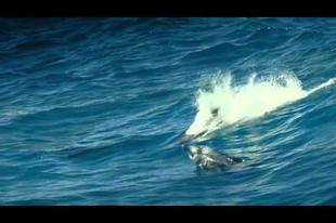 Óceán a földünk lelke