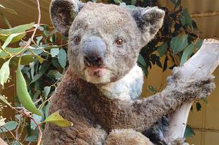 Az ausztrál erdőtüzek margójára