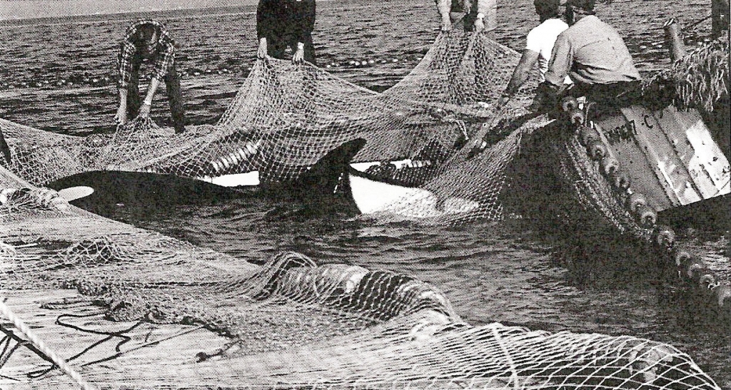 Lolita-and-Family-in-Nets-1024x547.jpg