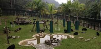 Az Animals Asia vietnámi medve menhelyének kifutója.