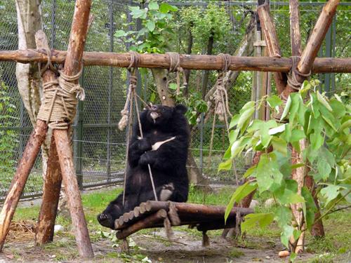 Az Animals Asia medve menhelye Vietnámban.