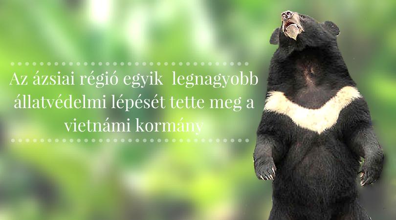 medve_farm_illegalis_medve_epe_csapolas_zoldella_vegan_eletmodblog_nyitokepnek.jpg