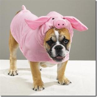 pig-halloween-costume_thumb.jpg