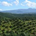 A pálmaolaj alapú biodízel bio címke nélkül