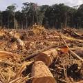 Tényleg megmenthetőek az amazonasi esőerdők?