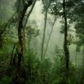 Az erdő a válasz az éhínségre