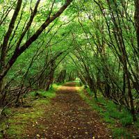 Tudományos eredmények bizonyítják az erdőfürdő jótékony hatásait