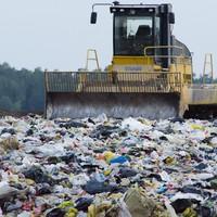 A műanyag-faló gomba menthet meg