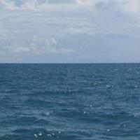 Az európai tengerek nem tiszták és nem egészségesek