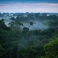 A brazil költségvetési hiány az Amazonas esőerdőit fenyegeti