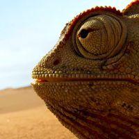 Hihetetlen felvételekkel tér vissza a BBC természetfilmje