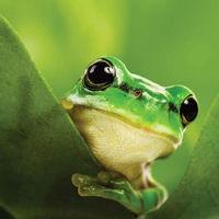 Veszélyben a biológiai sokféleség az EU-ban