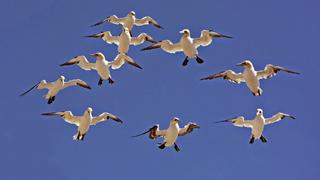 Költöző madarak tűnhetnek el a klímaváltozás miatt