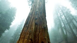 Extrém körülmények között tesztelik a fák tűrőképességét
