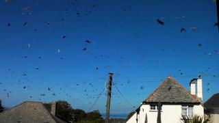 Így repülnek a madarak