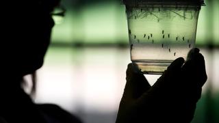 A klímaváltozás is közrejátszott a zikavírus terjedésében