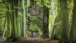 10 év alatt hoznak létre 100 éves erdőt