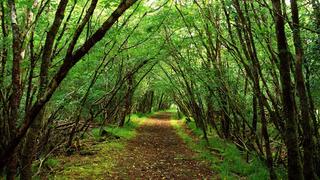Hogyan küzdhetnek meg az erdők a klímaváltozással