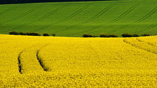 A bioüzemanyagok állnak nyerésre