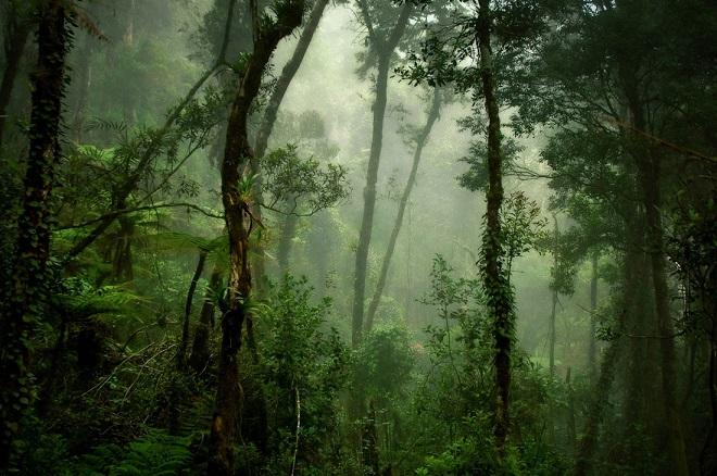 24-david-lazar-deep-forest.jpg