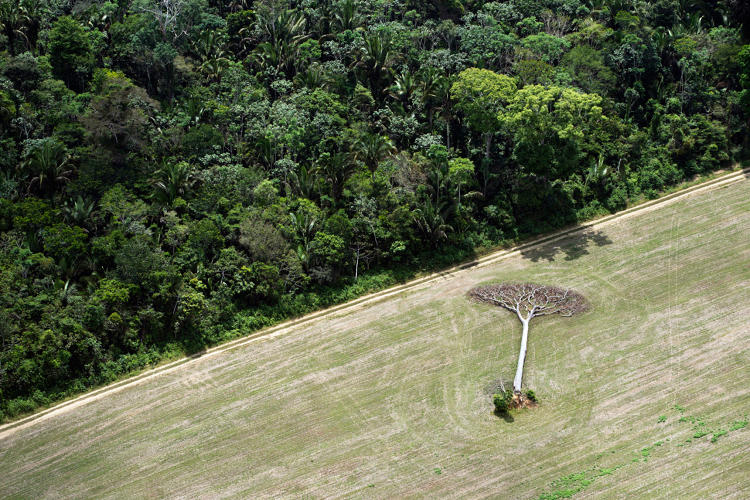 3058664-slide-11-a-birds-eye-view-of-humanity-killing-the-planets-rainforests.jpg