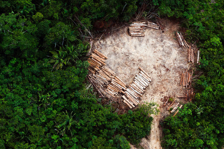 3058664-slide-12-a-birds-eye-view-of-humanity-killing-the-planets-rainforests.jpg