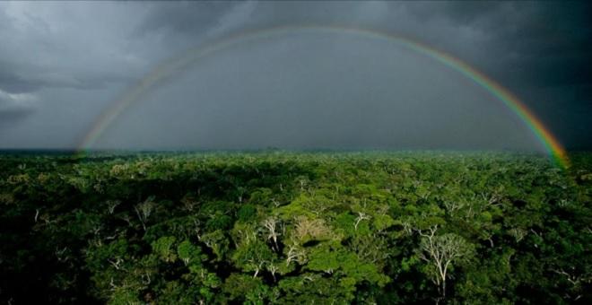 amazon_rainforest.jpg