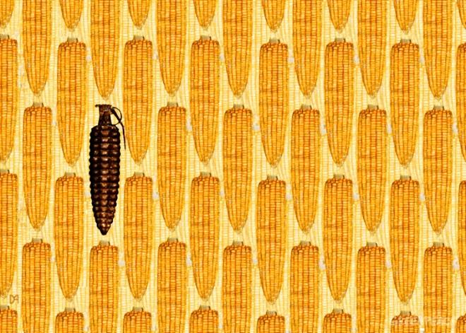monsanto-s-gmo-corn-threatens.jpg