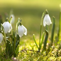 Közeledik a tavasz!