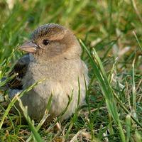 Gyakorlati madárvédelem - pályázat