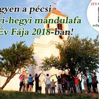 Az év fája program - szavazás 2018