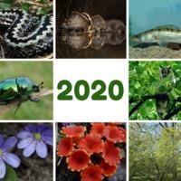 Az év élőlényei 2020