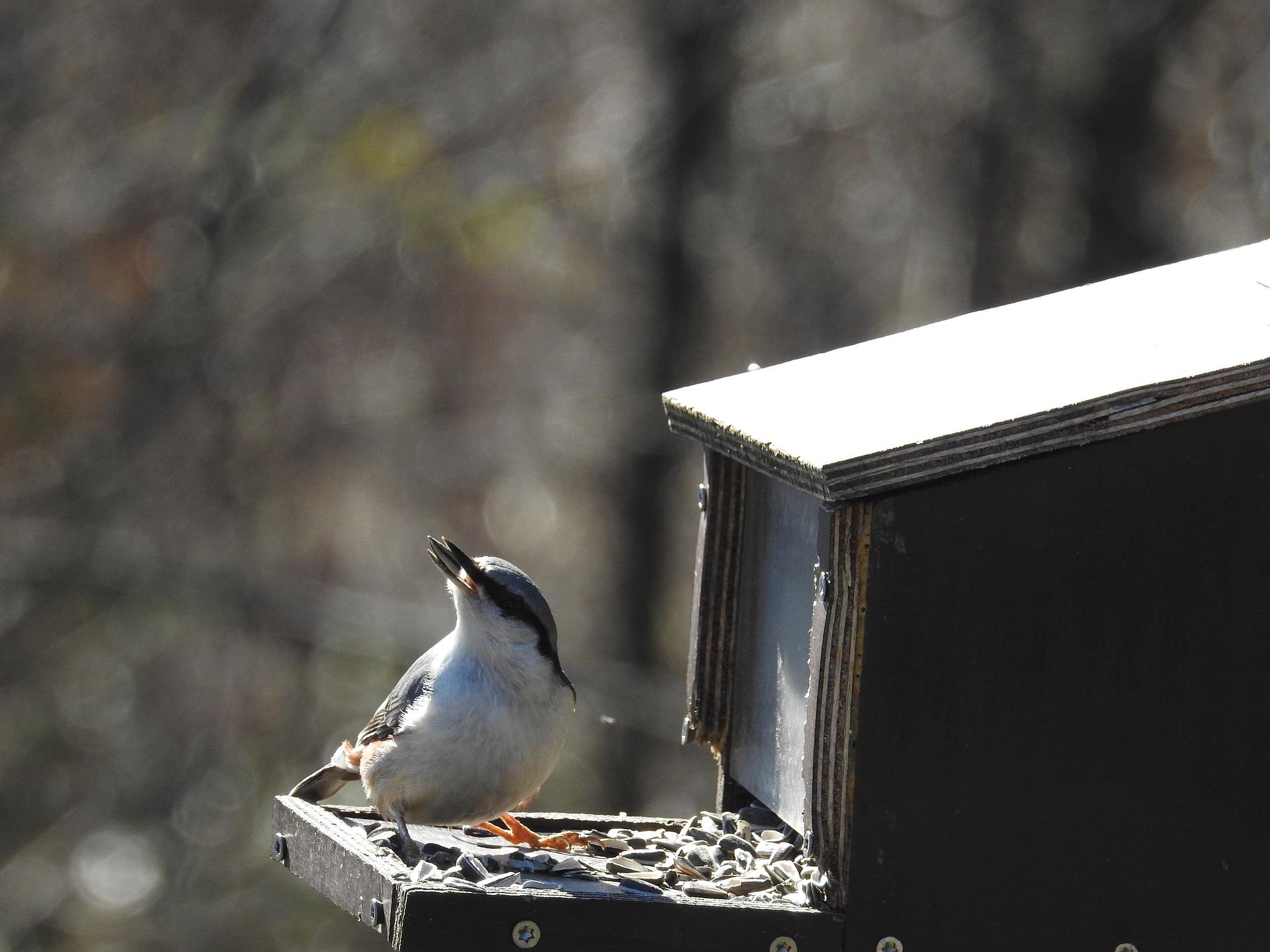 small-birds-2106602_1920.jpg