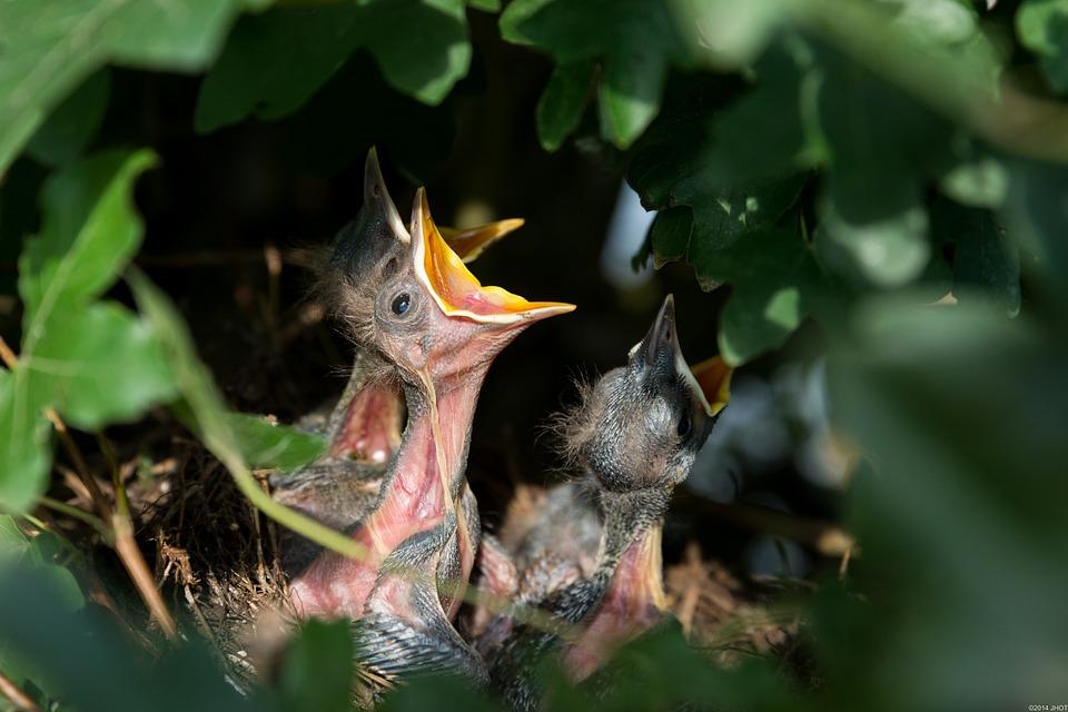 nest-384896_960_720.jpg