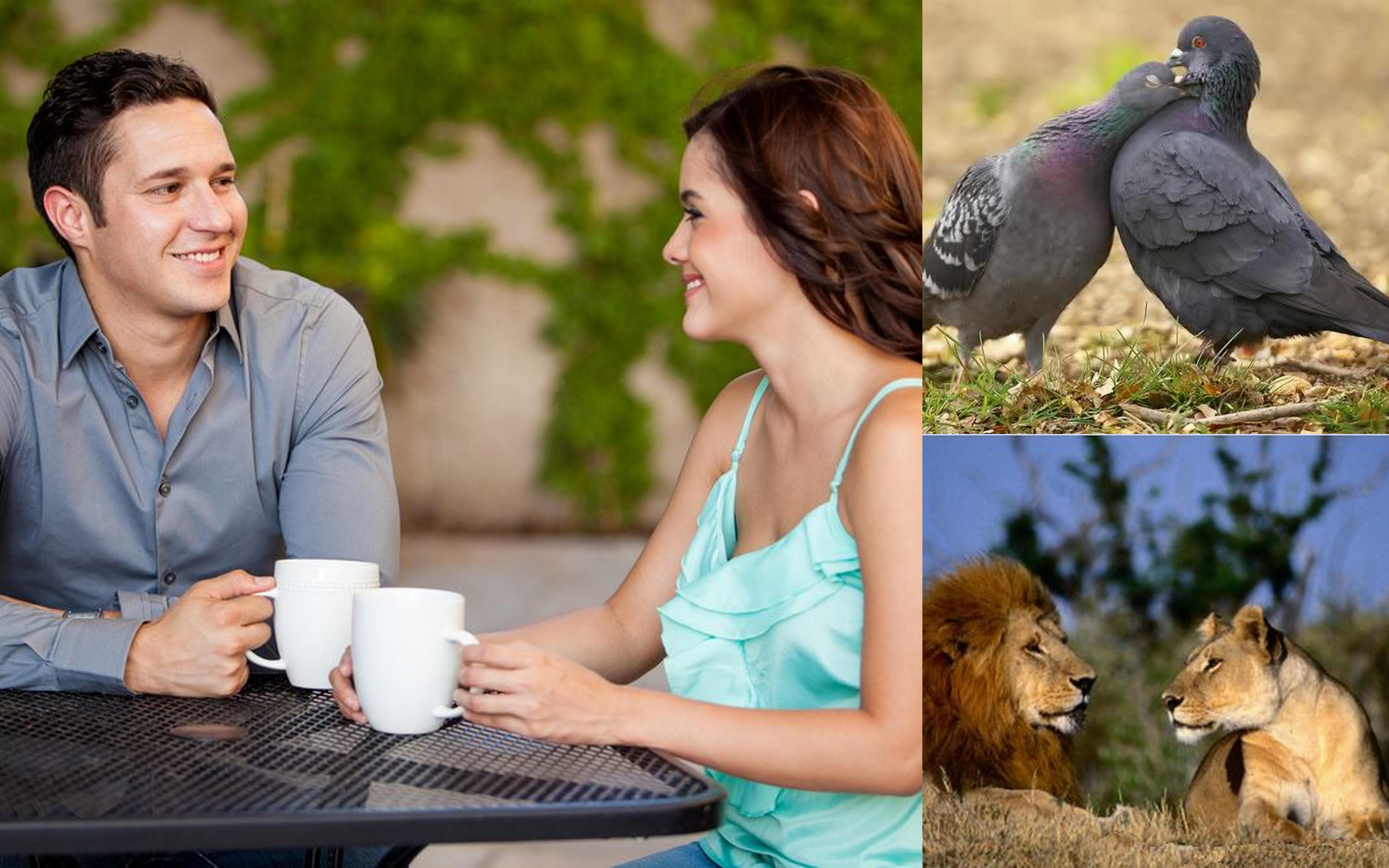 párok randevúk mutatják kérdéseket randevúk időpontjai