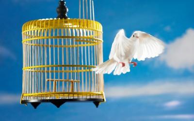 bird_cage_flying-400x250.jpg