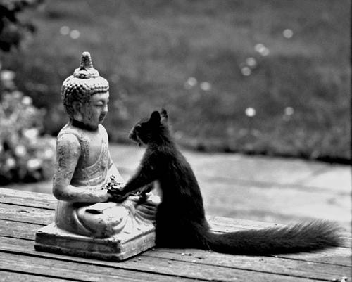 buddha-squirrel.jpg