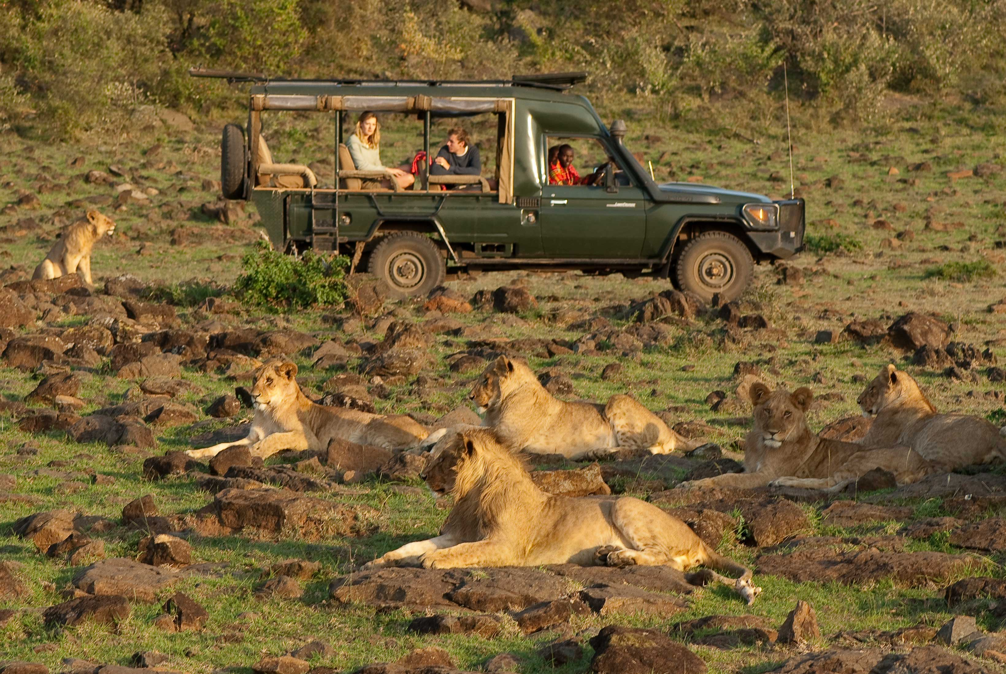 lions-and-car-1-of-1.jpg