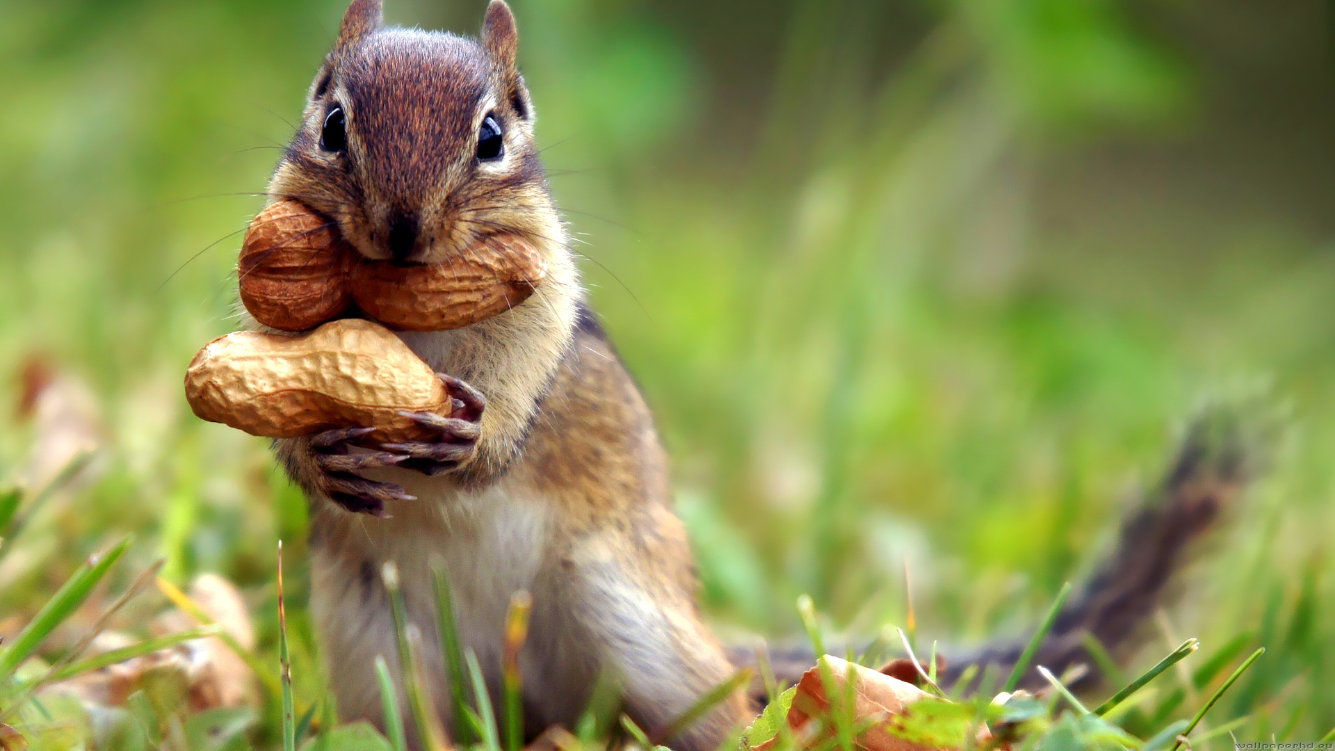 squirrel_2-1920x1080.jpg