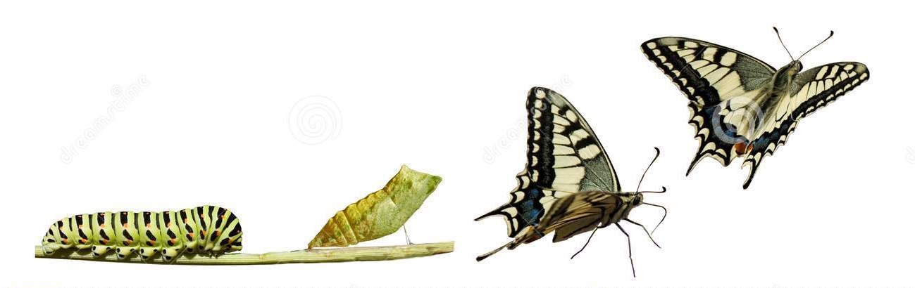 swallowtail-metamorphosis-8448050.jpg