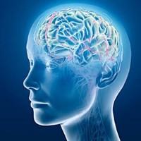 Hogyan hat az agyunkra?