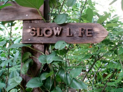 slow7.jpg