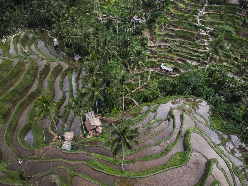 Rizsteraszok Balin, Indonéziában.
