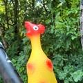 Térdelő csirke