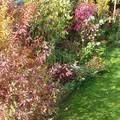 Nagykovácsi ősz